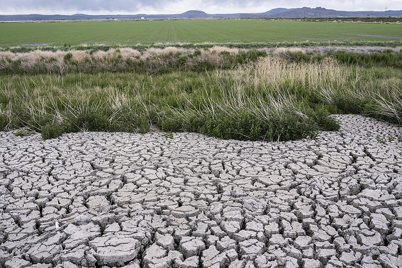 The dried, cracked earth of a former wetland that was drained in an effort to...