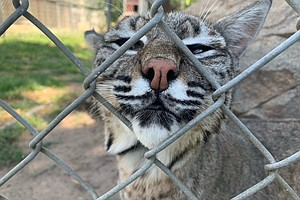 Local Animal Sanctuary Owner Fights For Legislation To Protect Lions, Tigers ...