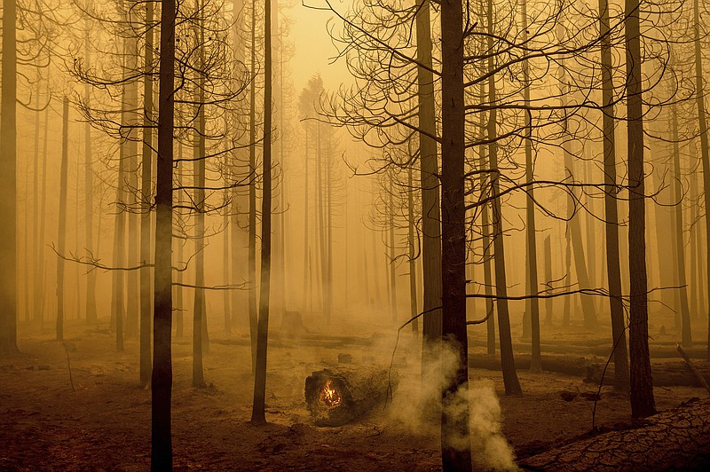 Following the Dixie Fire, flames burn in a tree in the Canyondam area of Plum...