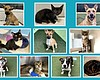 Ten puppies, dogs, kittens and cats currently a...