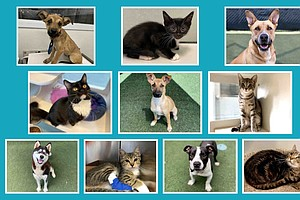 Photo for County Animal Services Looking For Pet Adopters, Foster Homes, Volunteers