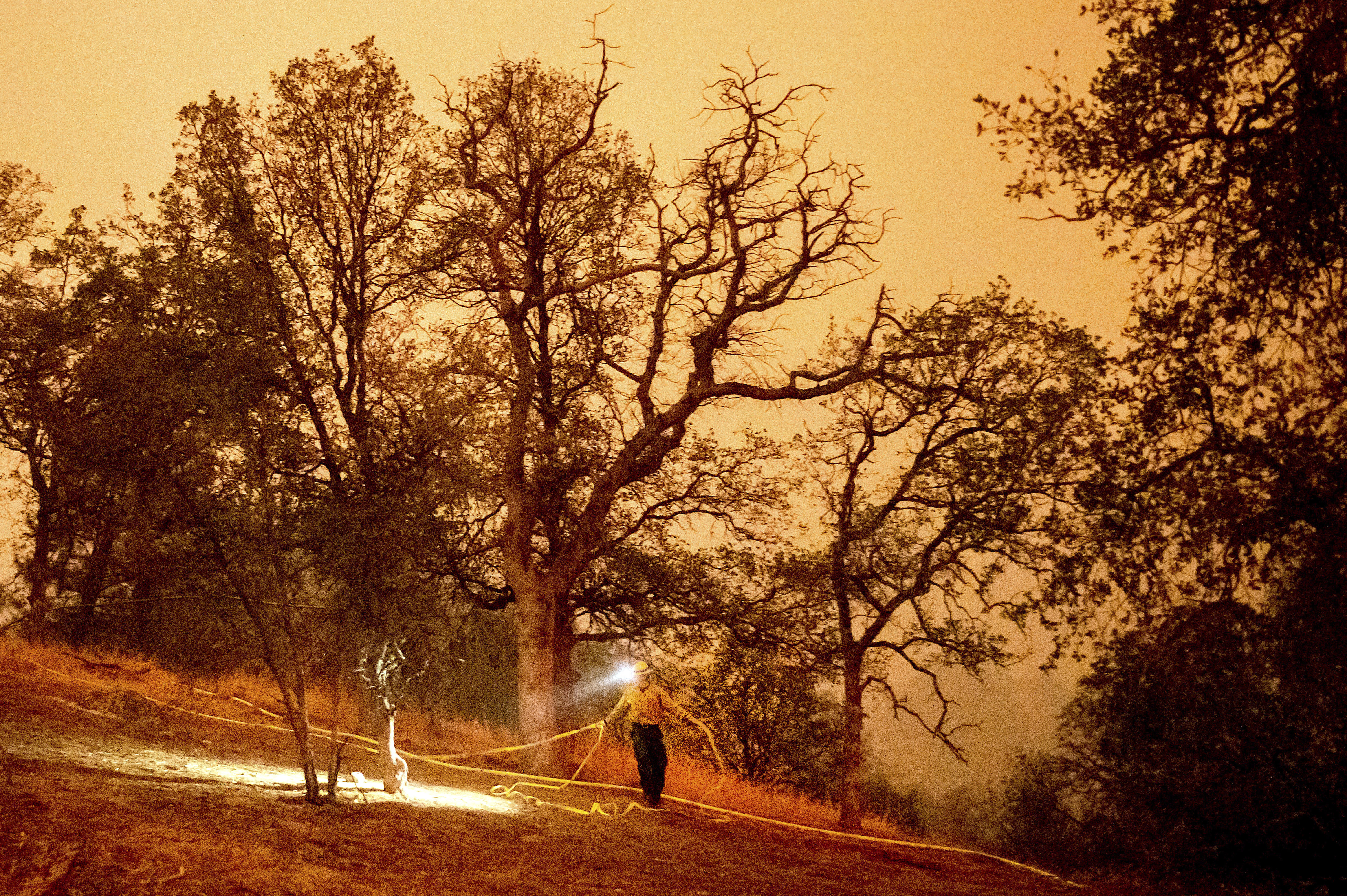 EXPLAINER: Fighting Fire With Fire To Protect Sequoia Trees