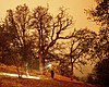 A firefighter lays hose around the Foothills Vi...
