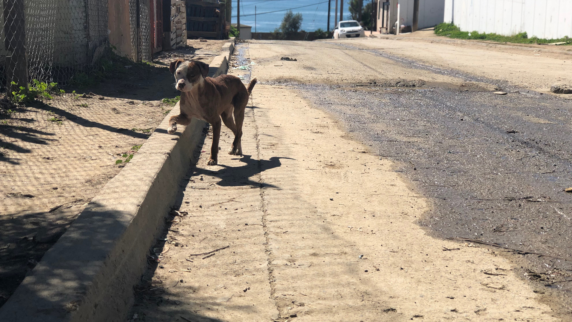 Part 2: Dog Crossing (Only Here)   KPBS