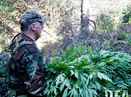 Pot Farms A Growing Problem