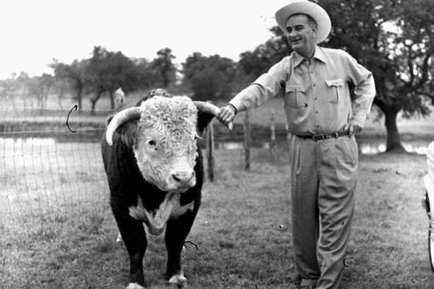 Then-Vice President-elect Lyndon Johnson with a prize-winning Hereford bull on his ranch near Johnson City, Texas, in 1960. Linguists say the twang that has long been synonymous with Texans is fading.