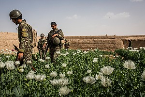 U.S. Official: Afghanistan Could Become 'Narco-Criminal S...