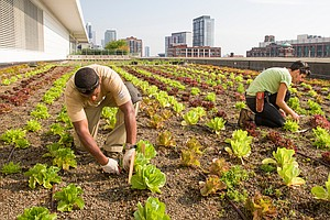 Rooftop Farming Is Getting Off The Ground