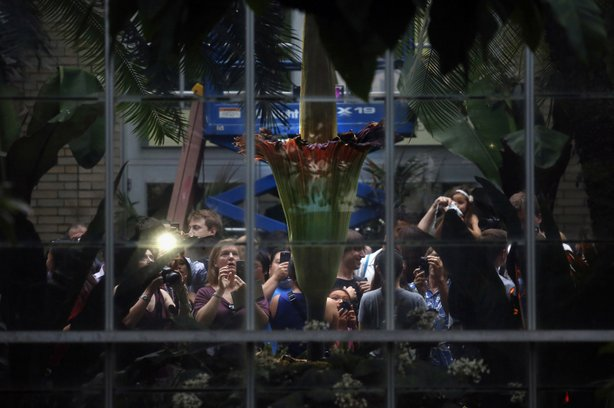 It was a real media event — thousands poured through to get a whiff of the giant plant.