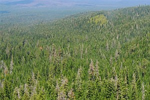 Massive Forest Thinning Project Gets New Contractor