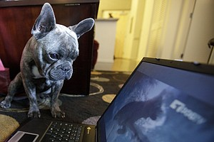 DogTV, The Channel For Stay-At-Home Pups, Is Going National