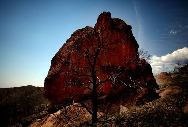 The remains of a tree are seen in front of a boulder in the Dome Wilderness area of New Mexico in August 2012. The Las Conchas Fire torched the land in 2011, burning through more than 150,000 acres of forest.