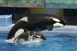 Months After 'Blackfish' Release, Controversy For SeaWorld Grows